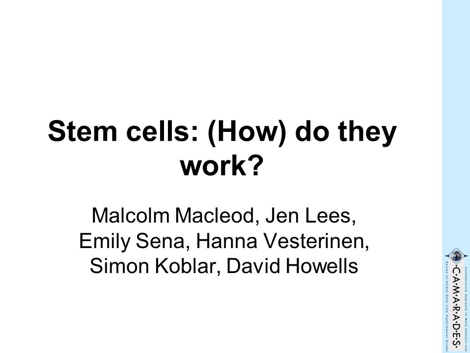 Stem cells: (How) do they work.