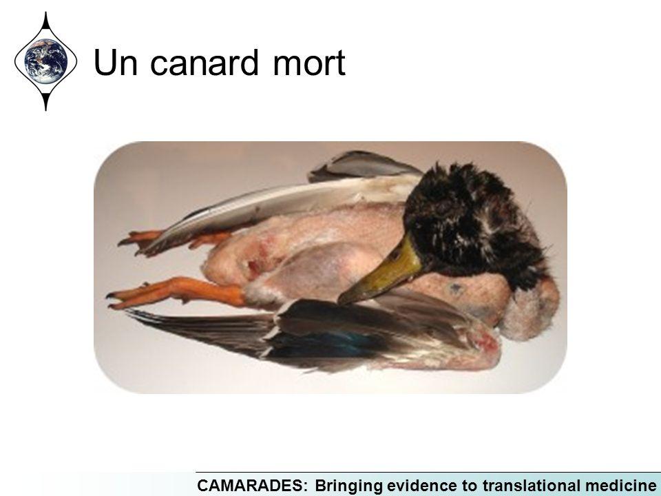 Un canard mort