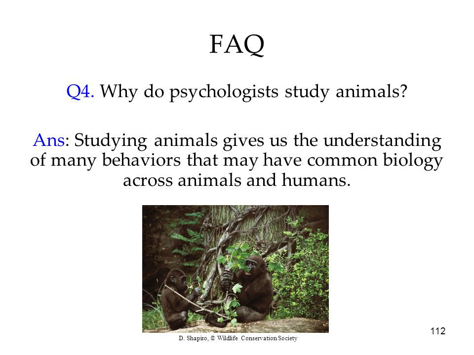 112 FAQ Q4. Why do psychologists study animals? Ans: Studying animals gives us the understanding of many behaviors that may have common biology across
