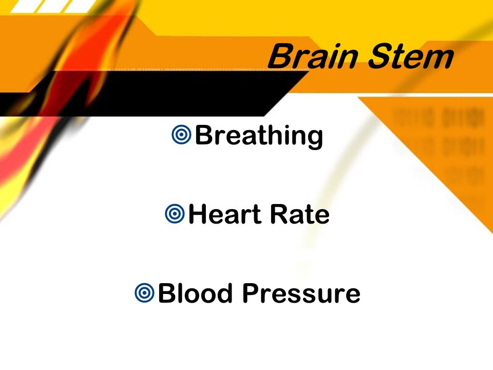 Brain Stem Breathing Heart Rate Blood Pressure Breathing Heart Rate Blood Pressure