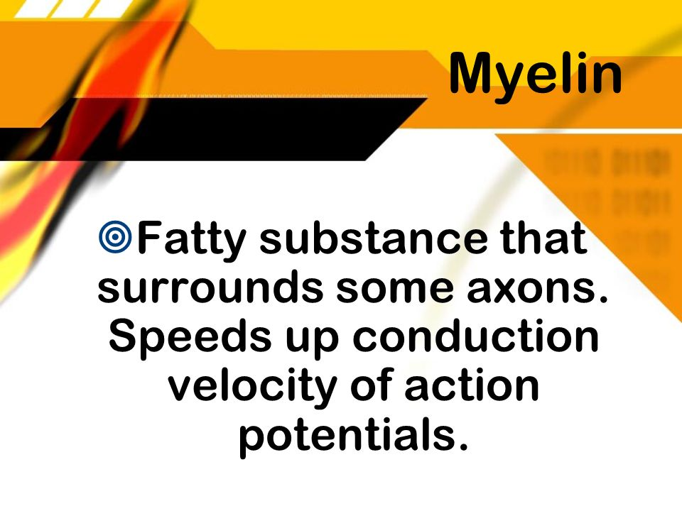Myelin Fatty substance that surrounds some axons. Speeds up conduction velocity of action potentials.