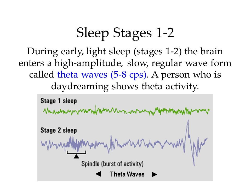 During early, light sleep (stages 1-2) the brain enters a high-amplitude, slow, regular wave form called theta waves (5-8 cps). A person who is daydre