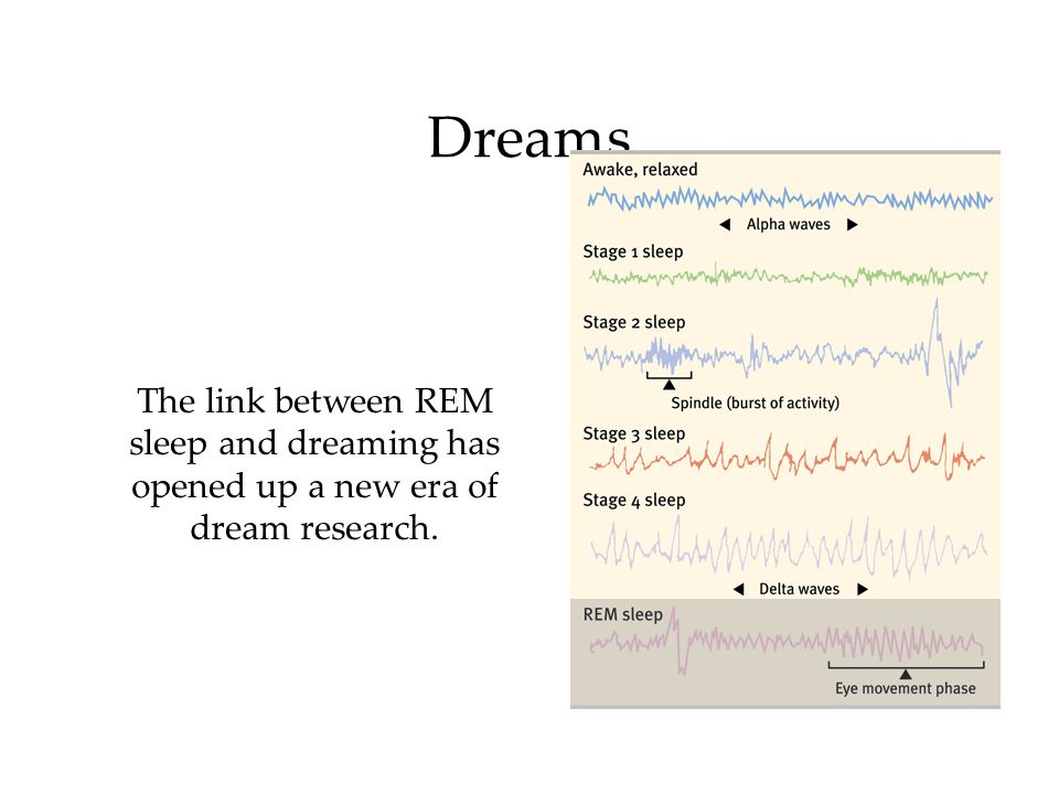 Dreams The link between REM sleep and dreaming has opened up a new era of dream research.