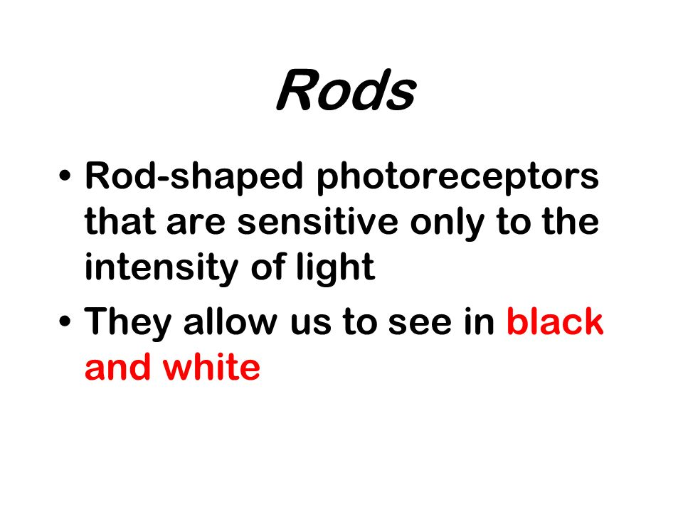 Rods Rod-shaped photoreceptors that are sensitive only to the intensity of light They allow us to see in black and white