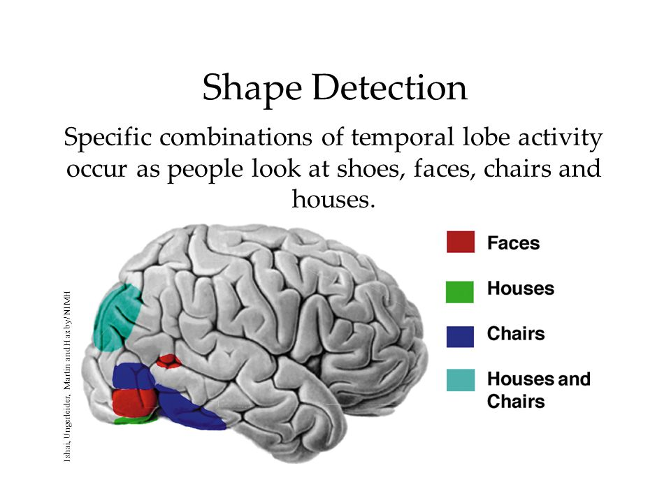 Shape Detection Specific combinations of temporal lobe activity occur as people look at shoes, faces, chairs and houses. Ishai, Ungerleider, Martin an