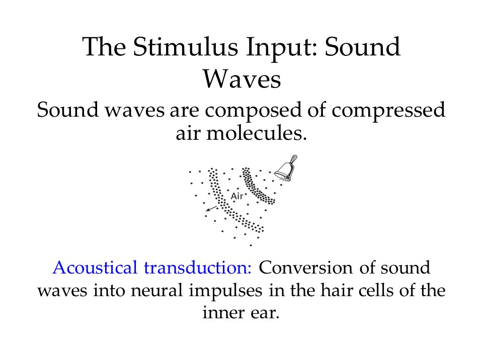 The Stimulus Input: Sound Waves Sound waves are composed of compressed air molecules. Acoustical transduction: Conversion of sound waves into neural i
