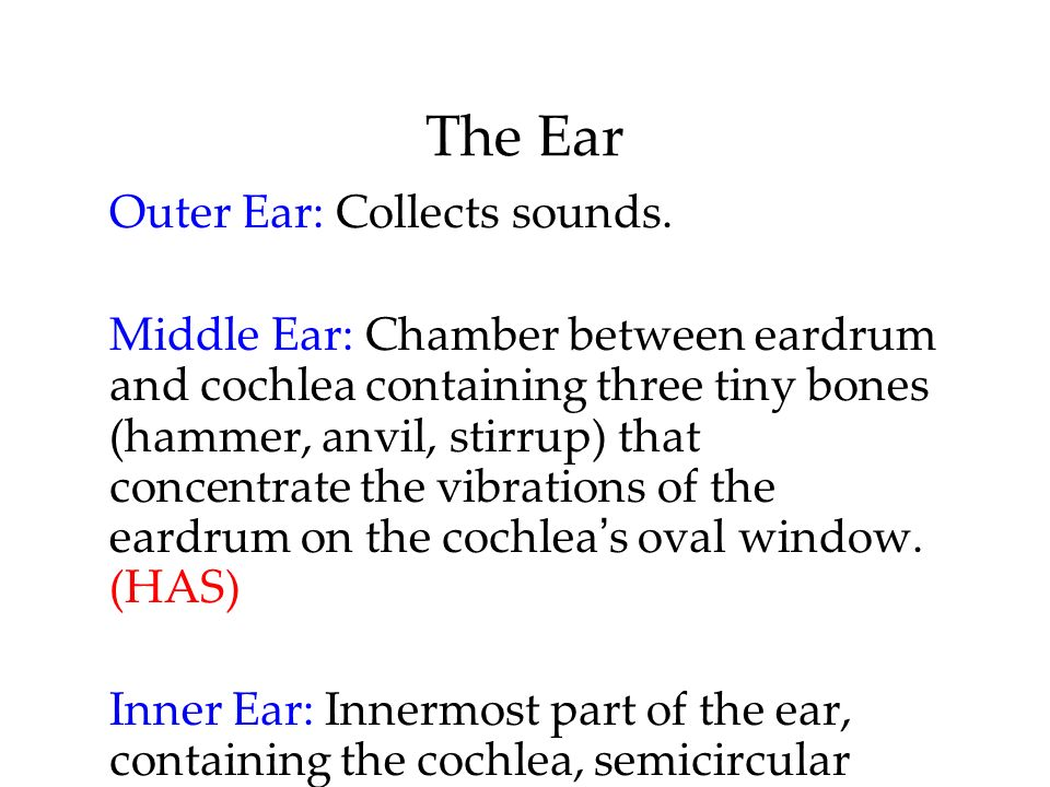 The Ear Outer Ear: Collects sounds. Middle Ear: Chamber between eardrum and cochlea containing three tiny bones (hammer, anvil, stirrup) that concentr