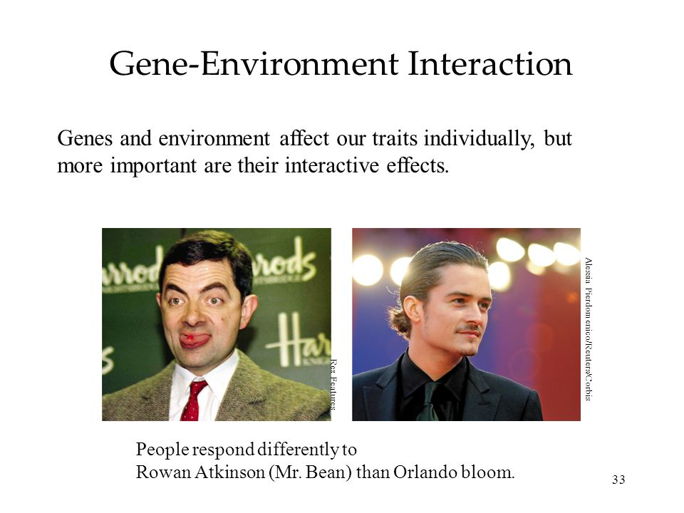 33 Gene-Environment Interaction Genes and environment affect our traits individually, but more important are their interactive effects.