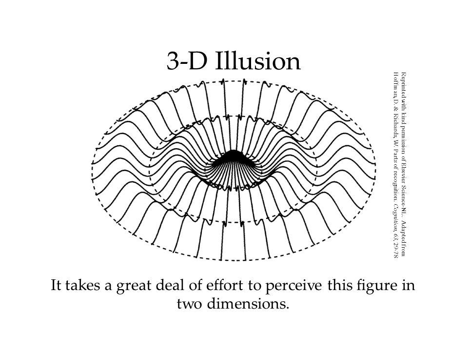 3-D Illusion It takes a great deal of effort to perceive this figure in two dimensions.