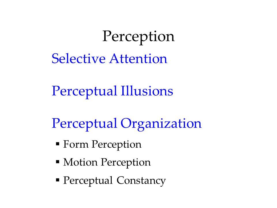 Perception Selective Attention Perceptual Illusions Perceptual Organization Form Perception Motion Perception Perceptual Constancy