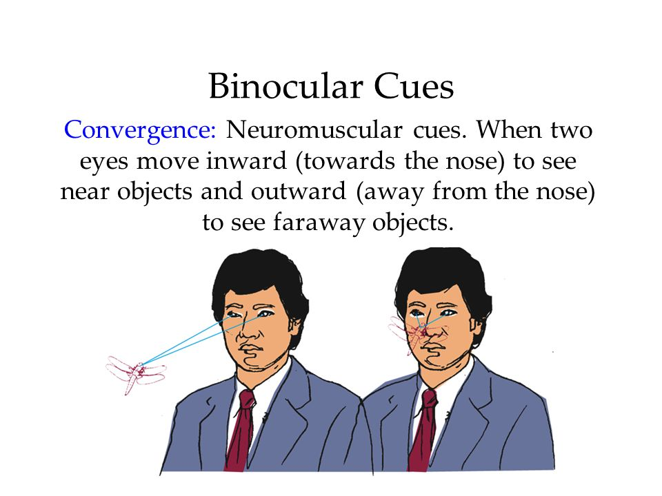 Binocular Cues Convergence: Neuromuscular cues. When two eyes move inward (towards the nose) to see near objects and outward (away from the nose) to s
