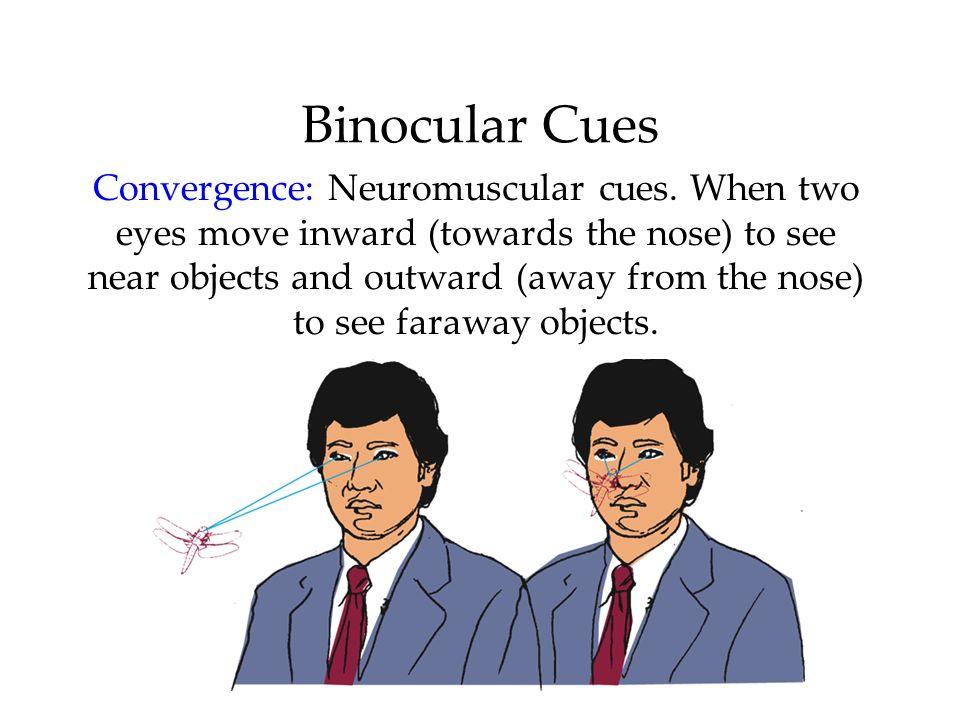 Binocular Cues Convergence: Neuromuscular cues.