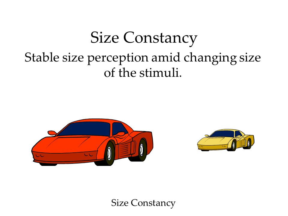 Size Constancy Stable size perception amid changing size of the stimuli. Size Constancy