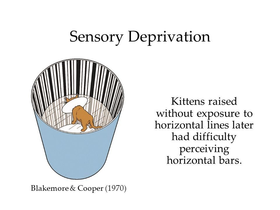 Kittens raised without exposure to horizontal lines later had difficulty perceiving horizontal bars. Blakemore & Cooper (1970) Sensory Deprivation