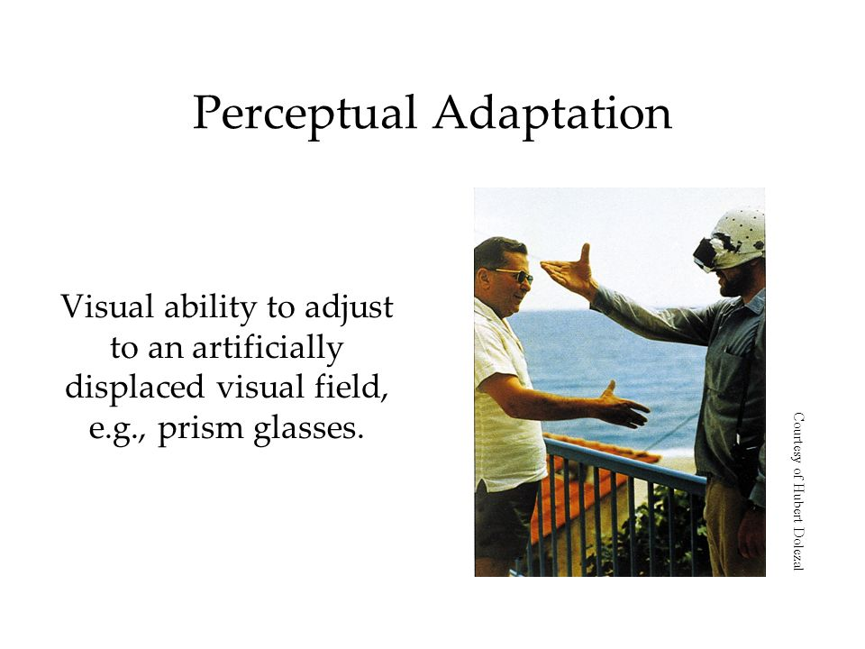 Perceptual Adaptation Visual ability to adjust to an artificially displaced visual field, e.g., prism glasses.