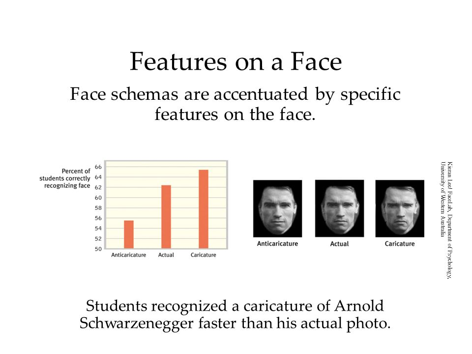 Students recognized a caricature of Arnold Schwarzenegger faster than his actual photo.
