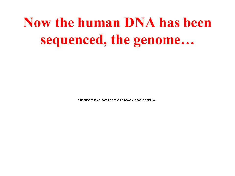 Now the human DNA has been sequenced, the genome…