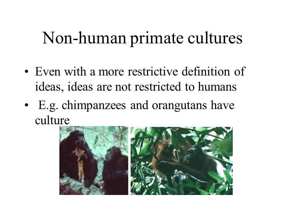 Non-human primate cultures Even with a more restrictive definition of ideas, ideas are not restricted to humans E.g.
