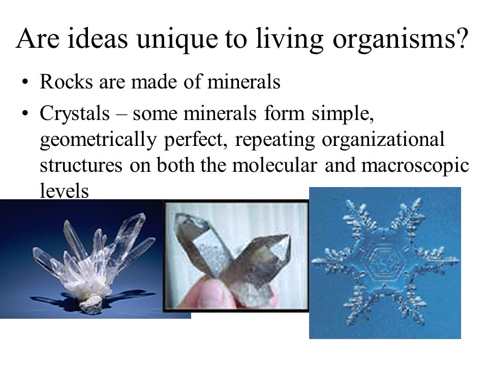 Are ideas unique to living organisms? Rocks are made of minerals Crystals – some minerals form simple, geometrically perfect, repeating organizational