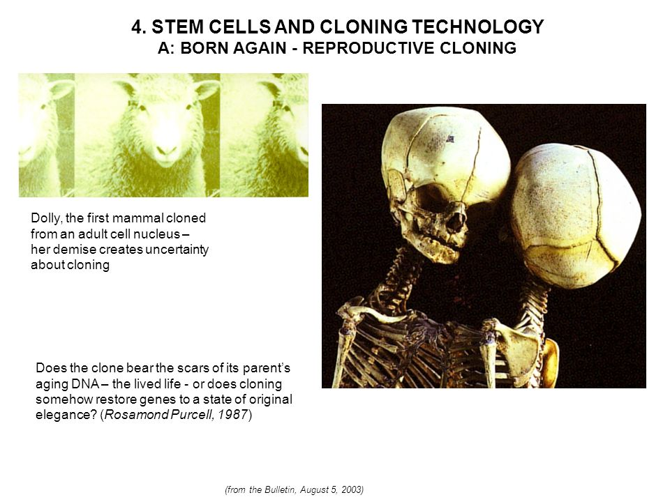 4. STEM CELLS AND CLONING TECHNOLOGY A: BORN AGAIN - REPRODUCTIVE CLONING Dolly, the first mammal cloned from an adult cell nucleus – her demise creat