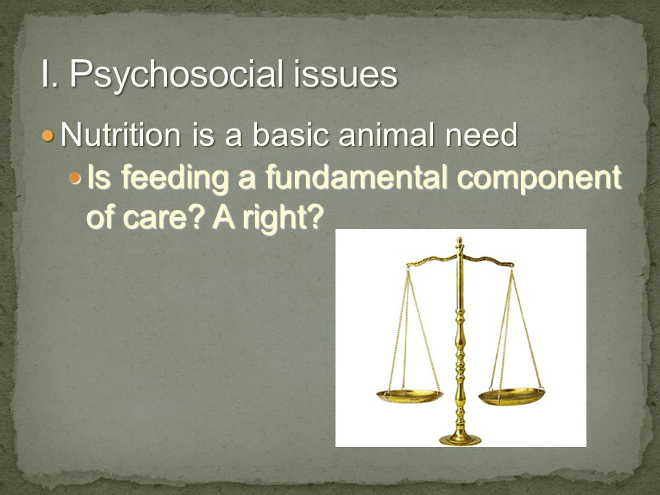 Nutrition is a basic animal need Nutrition is a basic animal need Is feeding a fundamental component of care.