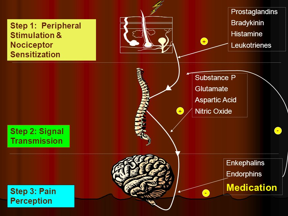 Prostaglandins Bradykinin Histamine Leukotrienes + Step 1: Peripheral Stimulation & Nociceptor Sensitization Step 2: Signal Transmission Step 3: Pain