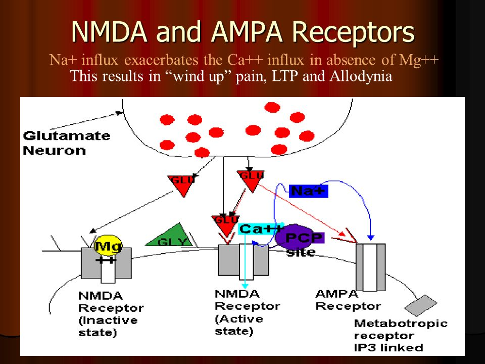 NMDA and AMPA Receptors Na+ influx exacerbates the Ca++ influx in absence of Mg++ This results in wind up pain, LTP and Allodynia