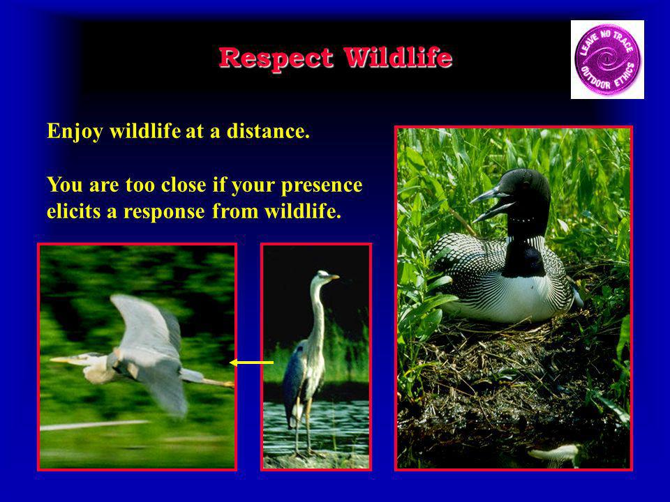 Respect Wildlife Enjoy wildlife at a distance.