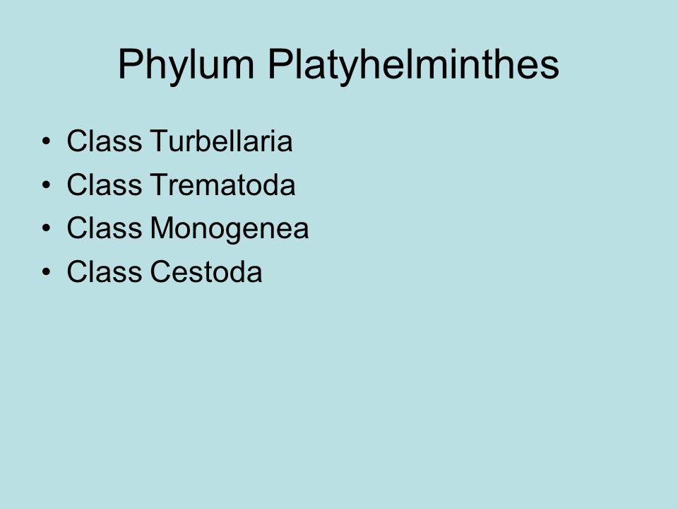 Phylum Platyhelminthes Class Turbellaria Class Trematoda Class Monogenea Class Cestoda