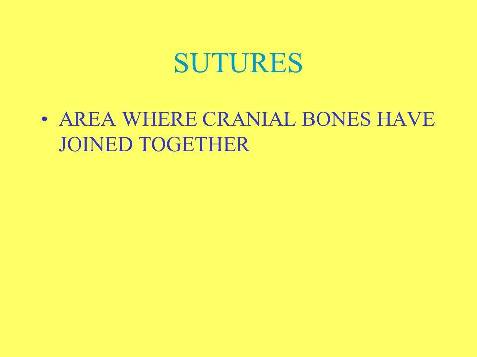 FACIAL BONES 14 FACIAL BONES MAIN BONES –MANDIBLE: LOWER JAW –MAXILLA: TWO BONES FORMING UPPER JAW –ZYGOMATIC: TWO CHEEK BONES –NASAL BONE: UPPER PART