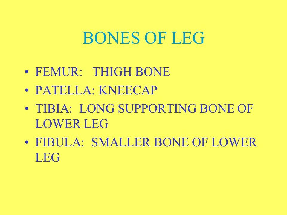 BONES OF PELVIC GIRDLE TWO OS COXAE –COXAL OR HIP BONES JOIN WITH SACRUM ON DORSAL PART OF BODY OS COXA MADE OF THREE BONES –ILIUM –ISCHIUM –PUBIS PRO