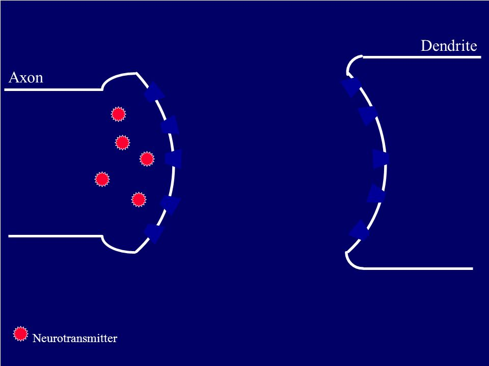 Axon Dendrite Neurotransmitter
