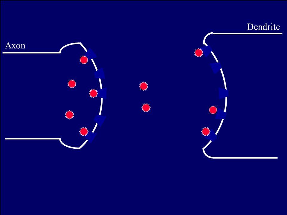 Axon Dendrite