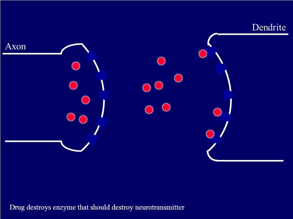 Axon Dendrite Drug destroys enzyme that should destroy neurotransmitter