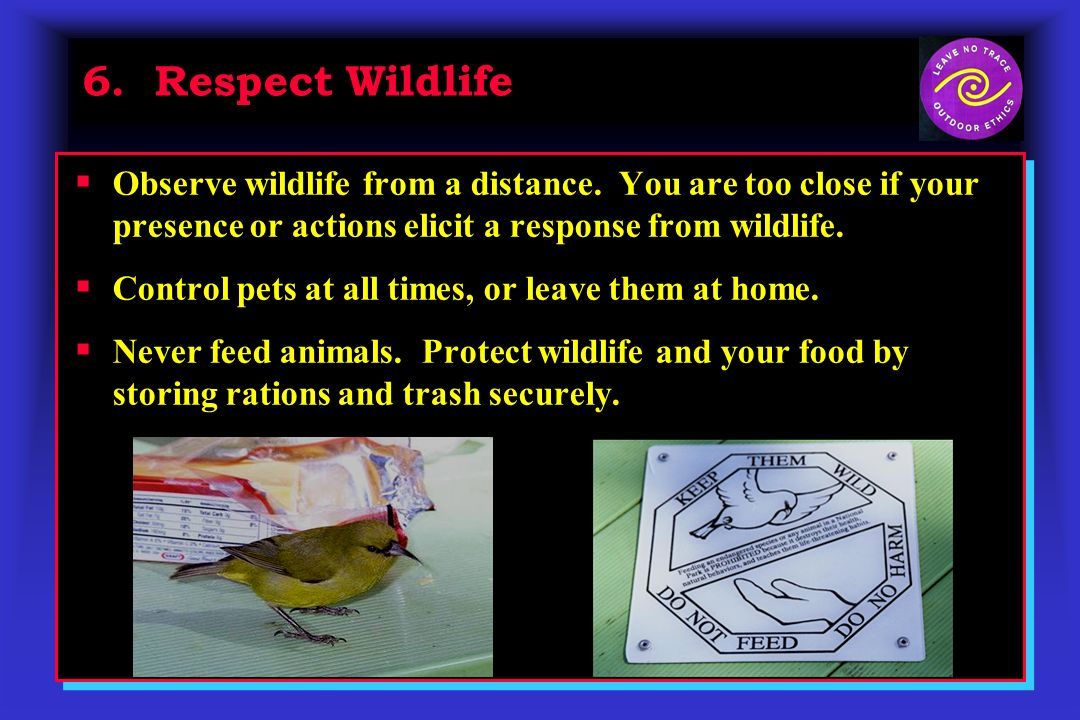 6. Respect Wildlife Observe wildlife from a distance.