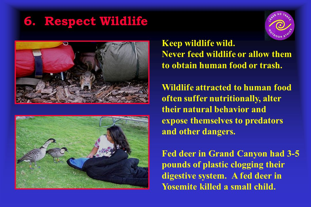 6. Respect Wildlife Keep wildlife wild.