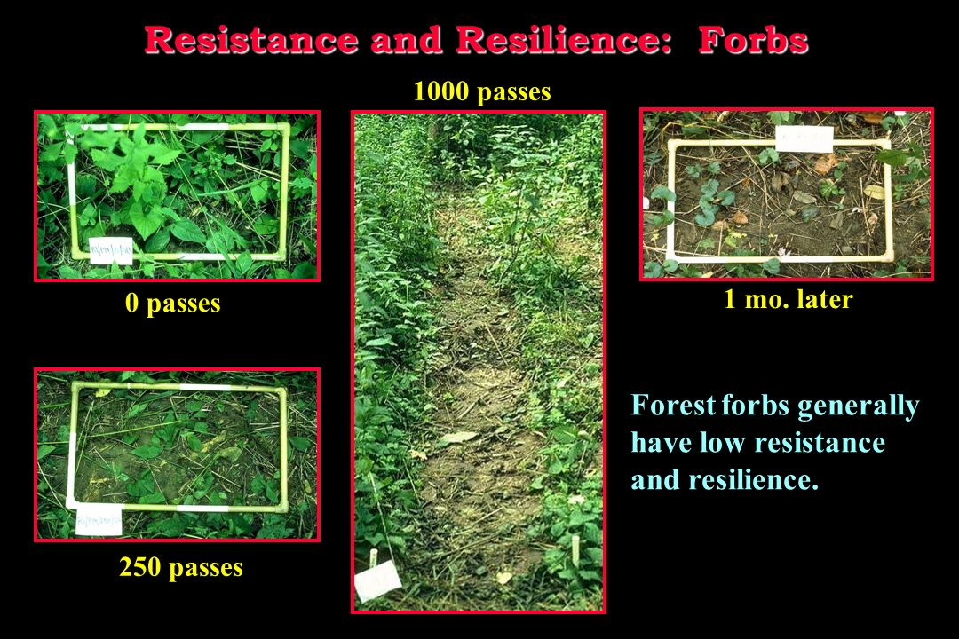 1000 passes Resistance and Resilience: Grasses 0 passes 250 passes 1 mo.