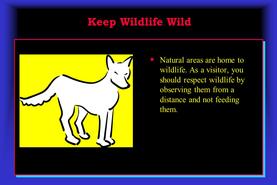 Keep Wildlife Wild Natural areas are home to wildlife. As a visitor, you should respect wildlife by observing them from a distance and not feeding the