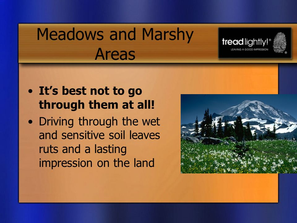 Meadows and Marshy Areas Its best not to go through them at all.