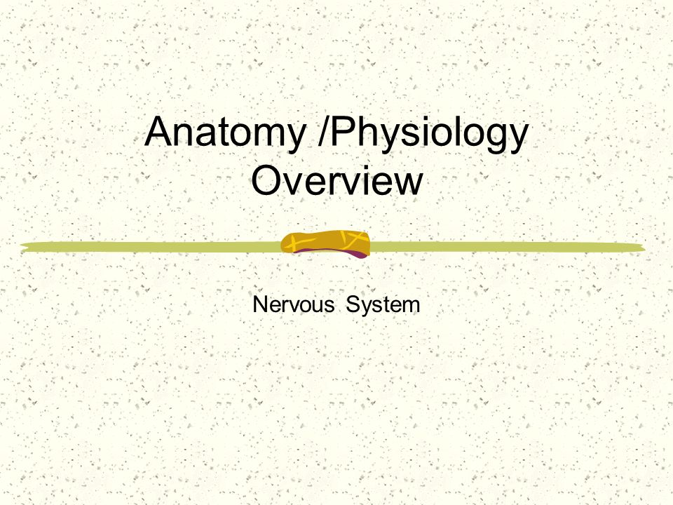Anatomy /Physiology Overview Nervous System