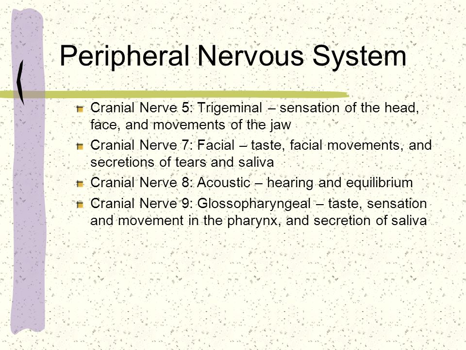 Peripheral Nervous System Cranial Nerve 5: Trigeminal – sensation of the head, face, and movements of the jaw Cranial Nerve 7: Facial – taste, facial