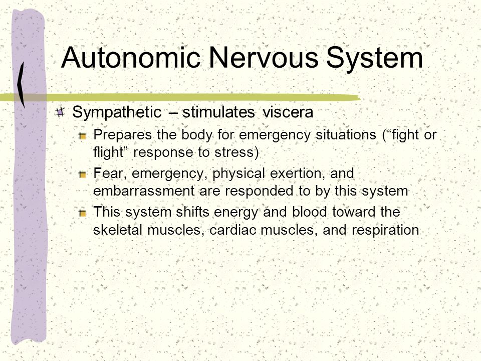 Autonomic Nervous System Sympathetic – stimulates viscera Prepares the body for emergency situations (fight or flight response to stress) Fear, emerge