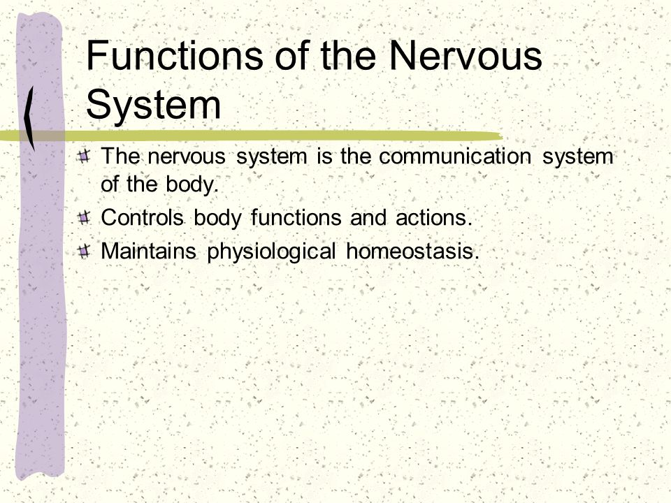 Components of the Nervous System Central Nervous System Brain Spinal Cord Peripheral Nervous System Sensory and Motor Nerves Cranial Nerves Spinal Nerves Autonomic Sympathetic Parasympathetic