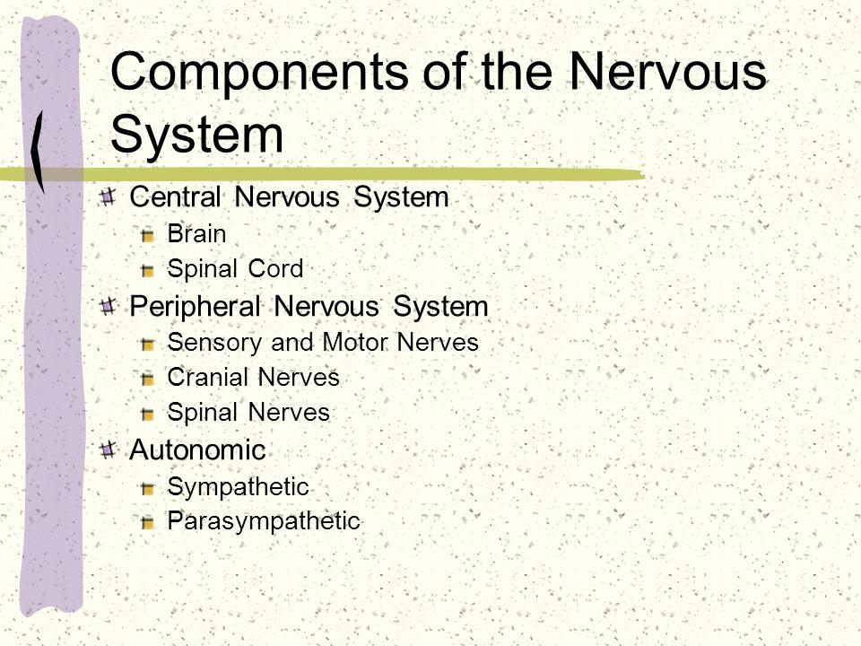 Components of the Nervous System Central Nervous System Brain Spinal Cord Peripheral Nervous System Sensory and Motor Nerves Cranial Nerves Spinal Ner