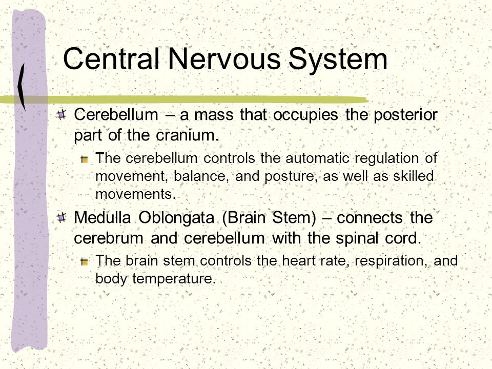 Central Nervous System Spinal Cord – A continuation of the brain which provides pathways to and from the brain, to and from the body.