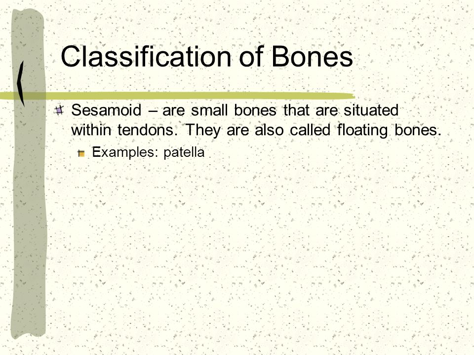 Classification of Bones Sesamoid – are small bones that are situated within tendons.