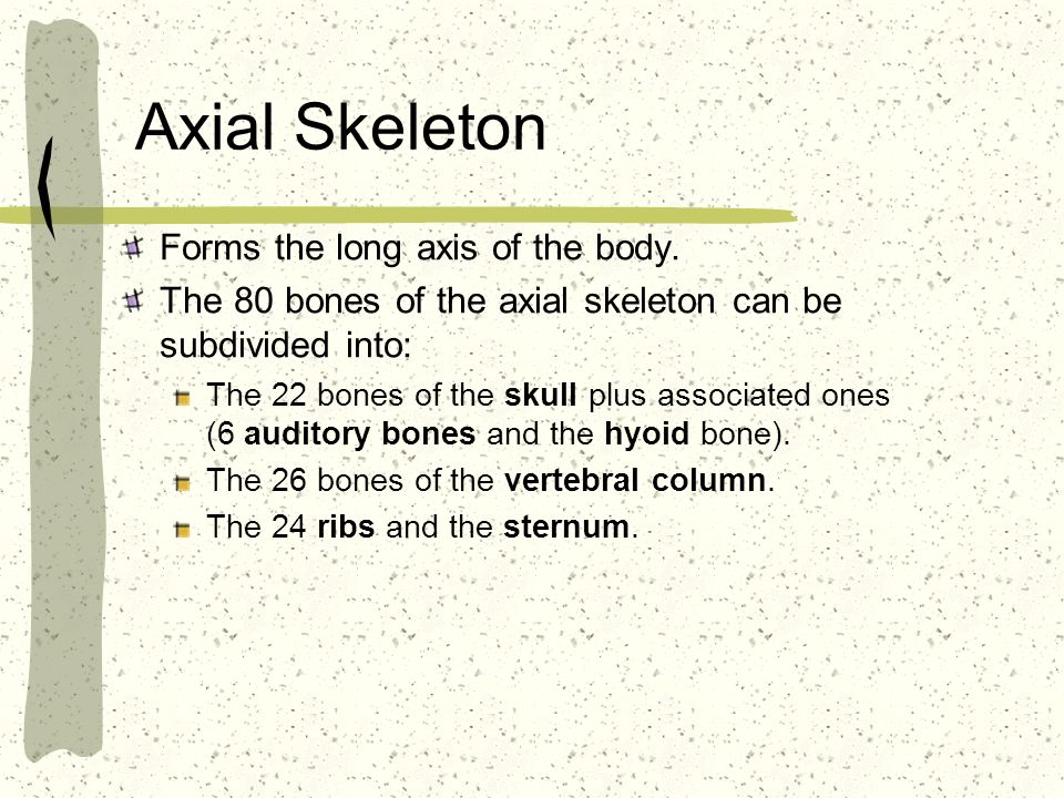 Axial Skeleton Forms the long axis of the body.