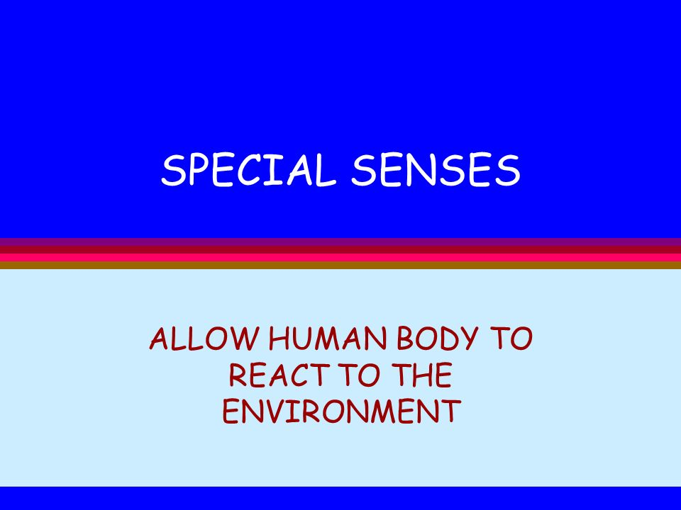 SPECIAL SENSES ALLOW HUMAN BODY TO REACT TO THE ENVIRONMENT