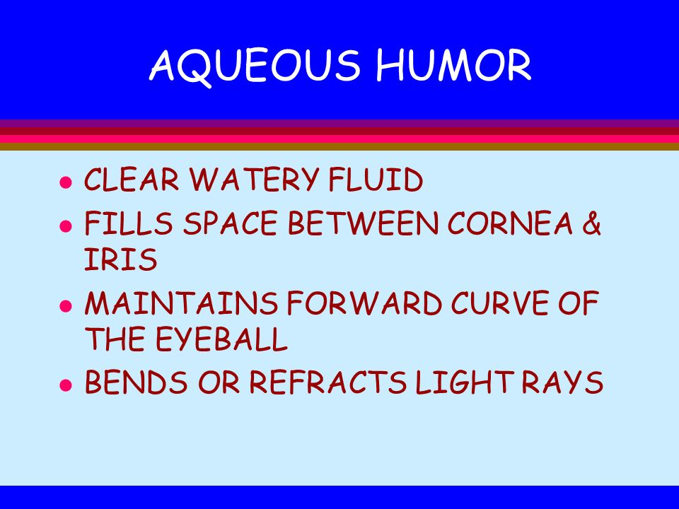AQUEOUS HUMOR l CLEAR WATERY FLUID l FILLS SPACE BETWEEN CORNEA & IRIS l MAINTAINS FORWARD CURVE OF THE EYEBALL l BENDS OR REFRACTS LIGHT RAYS