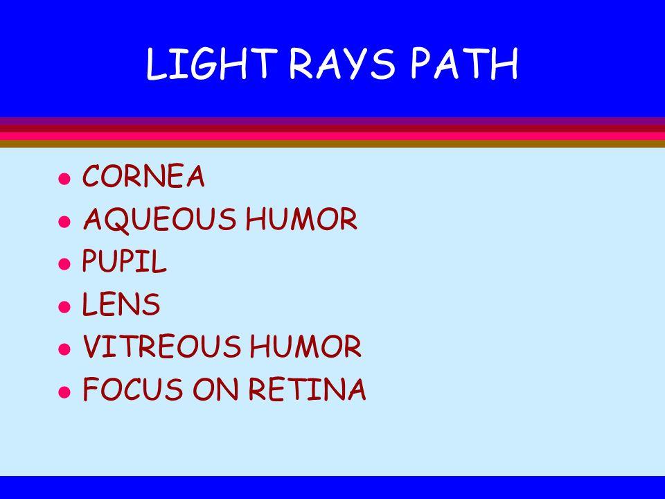 LIGHT RAYS PATH l CORNEA l AQUEOUS HUMOR l PUPIL l LENS l VITREOUS HUMOR l FOCUS ON RETINA